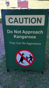 aggressive_kangaroo_sign