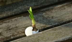 onion_scion_live_new_easter_resurrection_egg_seedling_spring-1195801